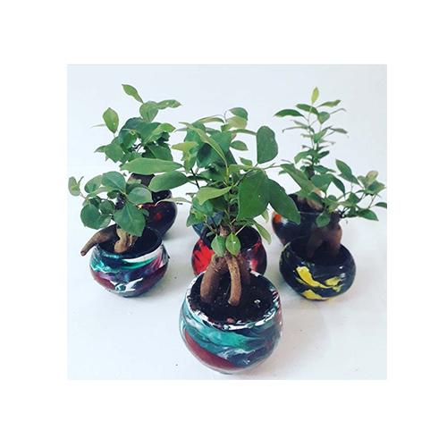 Plant & Pots